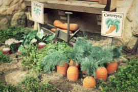 Des carottes et des radis dans un potager